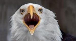 FCA - American Eagle